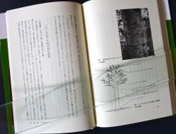 P1190096-1