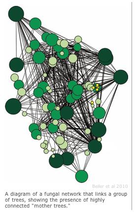 根系ネットワーク(2016-09-07 8.57.43)